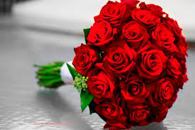 Online Special Rose Day Flower In Kanpur